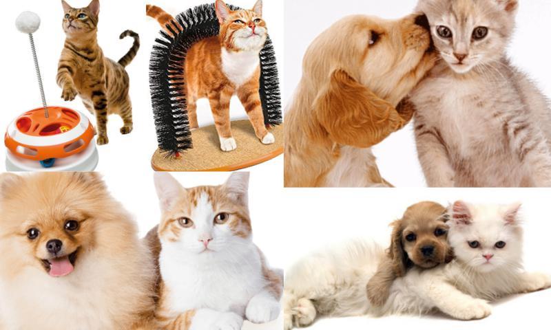 Kedi Köpek Ürünleri Nelerdir?