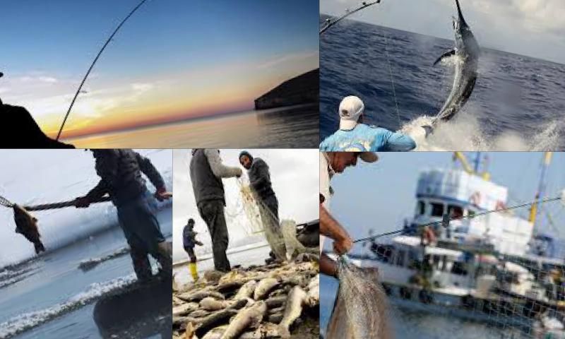 Balık Avı İçin Yem Hazırlanışı ve Canlı Yemler